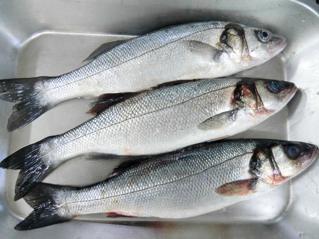 Fish freshness criteria - Choosing the right fish by ...